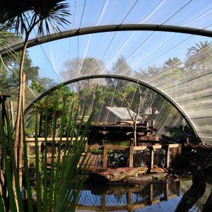 Auckland Zoo Avairies