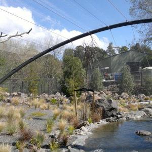 Auckland Zoo Blue Duck Aviary