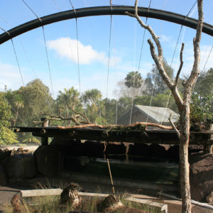 Auckland Zoo Wetlands Aviary